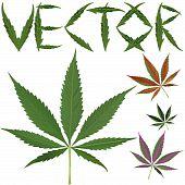 Marijuana Leafs Vectors