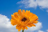 Decorative Flowers On Blue Sky
