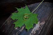 Wedding rings on green maple leaves