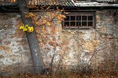 Window of the old house under the tree
