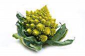 pic of romanesco  - a  fresh Romanesco broccoli cabbage on white - JPG