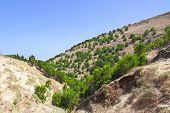 Highlands of El Hierro island, Canaries