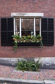 Window Box With Plants