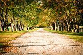 Canopy Tree Path