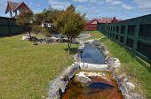 Hot Pools In Rotorua Village - New Zealand