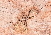 Abstract crack wood