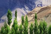 Landscape Of Leh, Ladakh, Jammu And Kashmir, India