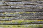 Old Wooden Logs Wall Covered With Green Moss