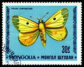 Vintage  Postage Stamp. Butterfly Colias Chrysoteme.