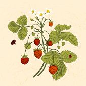 Bush of wild strawberries.