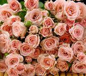 Big Roses texture