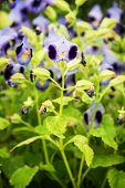 Special Wishbone Flowers