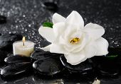 Spa still with gardenia flower and candle on pebbles