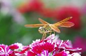 Постер, плакат: dragonfly on flower