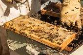 Traditional honey harvesting in a spring morning, Algarve, Portugal, Europe