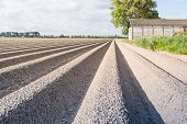 picture of potato-field  - Large field with newly seeded potatoes in ridges and an old barn in the background on a sunny day in spingtime - JPG