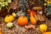 Autumn Pumpkin Decoration In Beautiful Colors