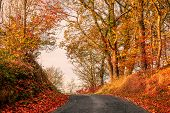 Road In Autumn Landscape