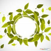 Beautiful green circle of leaves.
