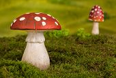 Fairytale background with agaric toadstools and moss