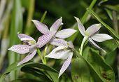 foto of epiphyte  - Garcia