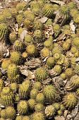 pic of semi-arid  - Cacti are unusual and distinctive plants which are adapted to extremely arid and semi - JPG