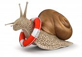 Snail and Lifebuoy (clipping path included)