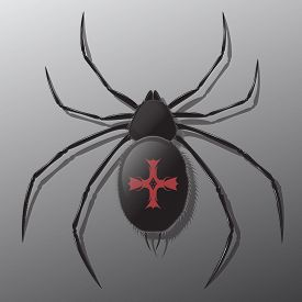 picture of black widow spider  - Black spider with shadow - JPG