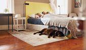foto of comfort  - Indoor shot of dog lying on floor in bedroom - JPG