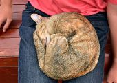 picture of lap  - Cat sleeping happily in the lap of a boy - JPG