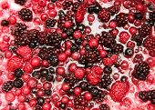 stock photo of blackberries  - Background texture of a mixture of assorted fresh autumn berries for flavouring ice cream with raspberries cranberries blueberries and blackberries - JPG