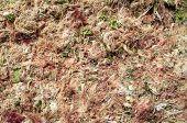 image of green algae  - Green algae and seaweed on sunny beach - JPG