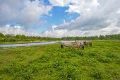 stock photo of herd horses  - Herd of horses in nature under a blue cloudy sky - JPG