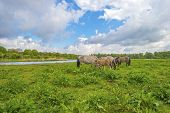 picture of herd horses  - Herd of horses in nature under a blue cloudy sky - JPG