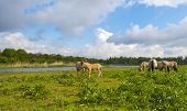 stock photo of herd horses  - Herd of horses in nature under a blue cloudy sky in spring - JPG