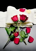 stock photo of poetry  - two red roses together with red petals on a black background on a scarf Poetry - JPG
