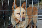 pic of caged  - Dog in the animal shelter standing in the cage - JPG