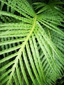 stock photo of fern  - Close up view of green fern frond - JPG