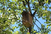 picture of nesting box  - A nesting box - JPG
