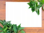 picture of nettle  - spring frame of nettle on a paper on the wooden background - JPG