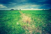 foto of grassland  - Vintage photo of green springtime meadow landscape with cloudy storm sky - JPG