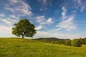 pic of gallows  - Gallows Hill  - JPG