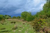 picture of common  - Chailey common at over 450 acres is one of the largest heathland commons in Southern England - JPG