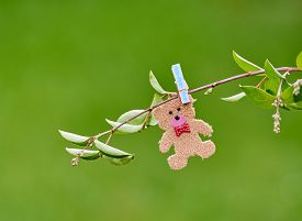 picture of pegging  - Cute romantic little teddy pegged on a branch in a field  - JPG