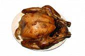 holiday roasted turkey on platter (isolated)
