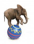 elephant balance on ball