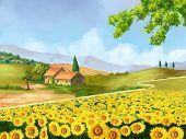 Sunflowers field in Tuscany, Italy. Original digital illustration.