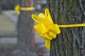 Yellow Ribbon Around An Old Oak Tree 2