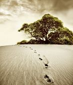 stock photo of footprints sand  - footprint in the desert and a tree - JPG