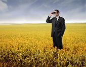 Portrait of a businessman standing on a cornfield and using a pair of binoculars